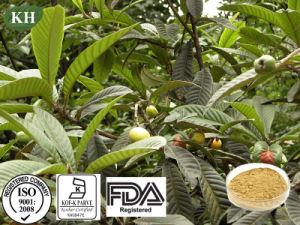 100% natural 25%~98% Ácido Ursolic