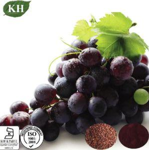 Aprovisionamento de fábrica de semente de uva natural extrato de planta
