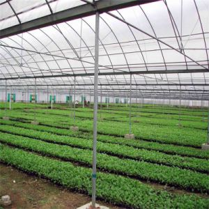 Feuille de polycarbonate Green House pour profilé en aluminium Vegebable commercial