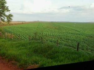 水保持のエージェントとしてを使用して農業のための樹液の極度の吸収性ポリマー