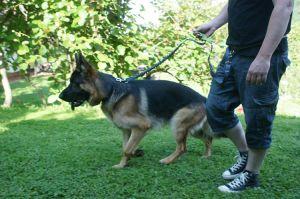 Amortiguación mascota correr deporte perro corredor Bungee Correa