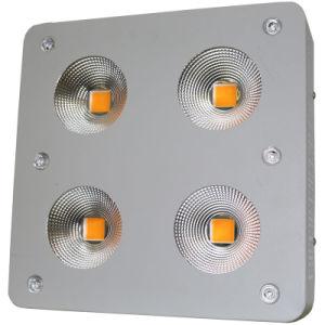 600 W de potência elevada 3500K LED SABUGO crescer todo o espectro de luz