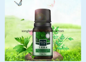 Huile essentielle d'absinthe Huile Essentielle de massage Aiye Moxibustion Huile végétale d'aromathérapie avec de la Lavande Rose OEM d'huile
