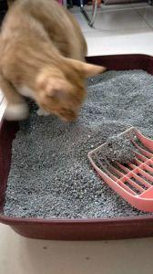 Gatos de bola con un fuerte control de olores (FH05).