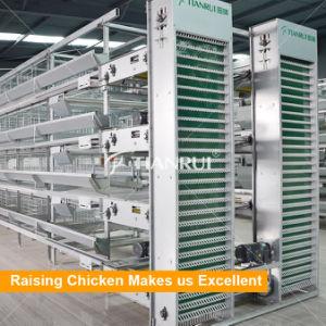 Chicken usada bateria galvanizado automática gaiolas galinha poedeira/camada/galinha dos ovos