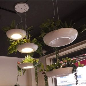 Kreative Pflanzenhängende Lichter für Hauptdekoration (GD-H609-1)
