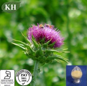 100% natural Protegendo hepática Leite Ingrediente Thistle Extract Silybin Silymarin 80%, 30%