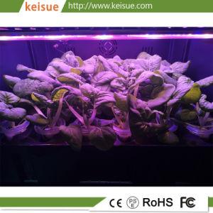 Cassetto di piantatura idroponico di Keisue con 36holes per l'azienda agricola verticale