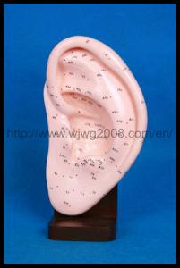 Message Acupuncture de l'oreille Modèle (M-3-22)