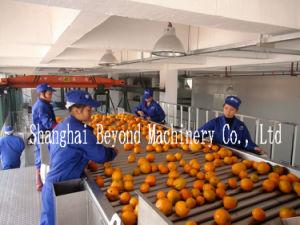 5t/h a linha de produção de sumo de fruta concentrado