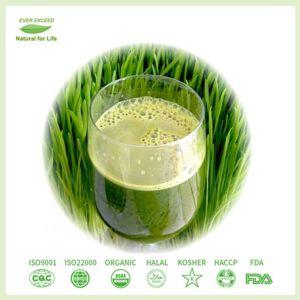 100% natürliches organisches Weizen-Gras-Saft-Grün-Puder