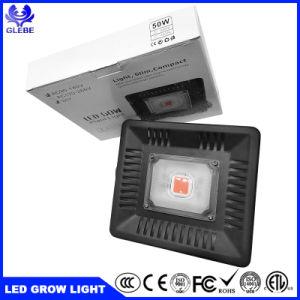Venda por grosso de Full Spectrum 50W potente LED SABUGO Hidrop crescer a luz para a fábrica de estufa