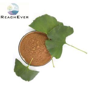 Flavonas 24% Lactonas 6% Ginkgo Biloba extrato da planta