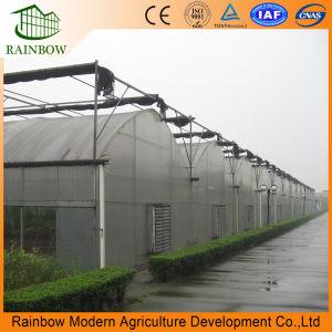 Professional Multi-Span Tunnel/Tipo de cava-de-PE/Po Film estufa pl para tomate e pepino Straweberry Cultivo hidrop ico