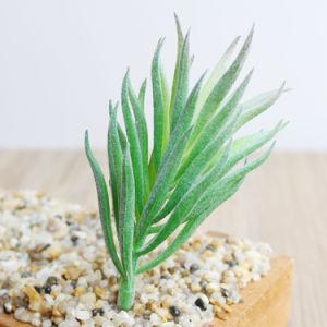 Небольшой Flocking сосны Thorn Искусственные растения Succulents украшения