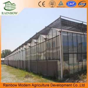 플랜트 야채를 위한 건축재료 강화 유리 온실