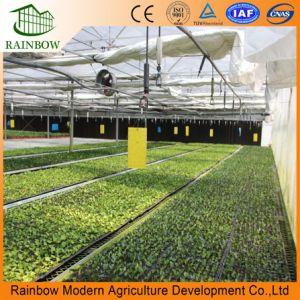 야채와 꽃 성장하고 있는을%s Venlo 유형 유리제 온실