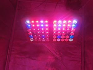 2017 la pianta prodotta alta PARITÀ LED di disegno modulare 300W coltiva la lampada