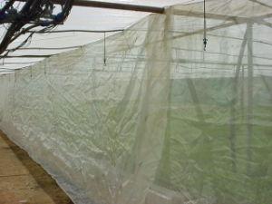 De HDPE 50mesh de plástico com efeito de malha de redes de insectos