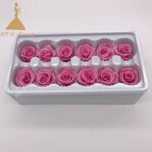 Класс А 3-4см Timeless реального роз в подарок на день Святого Валентина