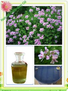 100% puro aceite de geranio