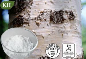 Betulina, Betulinol, Extrato de pó de casca de bétula, 98% Betuliin