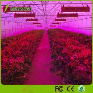 A planta do diodo emissor de luz cresce o painel que claro de 300W 600W 900W 1000W 1200W 1500W 1800W 2000W o diodo emissor de luz cheio do espetro cresce claro para a flor e o vegetal da estufa