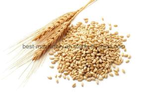 أرزّ قمح أرزّ حبّ ذرة [سبسفيك غرفيتي] [ستونر] لأنّ [غرين كلنينغ]