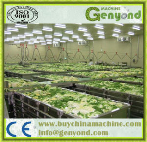 Venta caliente de la línea de procesamiento de vegetales encurtidos