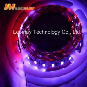 Lampe SMD5050-WN30 des Helligkeits-hohe Lumen-LED