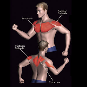Strumentazione di forma fisica/strumentazione di ginnastica per la multi giungla 4-Stack (FM-2004)