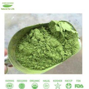 Polvere organica del tè verde di Matcha con il prezzo di Competiitive