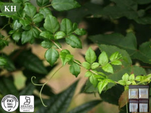 간 보호; 잔존물 치료 덩굴 차 추출 Dihydromyricetin 98% HPLC