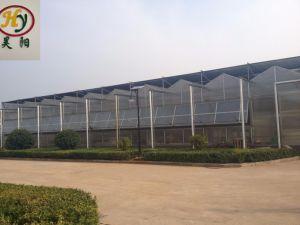 La agricultura Multi Span láminas de policarbonato/PC para el tomate de invernadero hoja