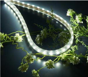 Alto indicatore luminoso della corda di lumen LED di luminosità eccellente (220Vor 110V)