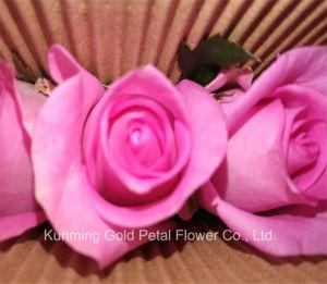 Regalos Románticos flores frescas de montaña de nieve de Caramelo Rosa