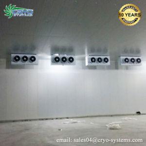 Condensador da unidade de condensação Vs Unidade de Refrigeração para a sala fria
