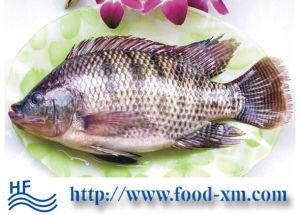 Prezzo all'ingrosso di tilapia di pesca di alta qualità