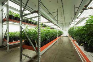 LED UL todo o espectro do painel de vegetais crescem com efeito de luz