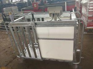 Viehbestand-Geräten-elektrische Ziege-Lamm-Schaf-wiegende Schuppe