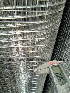 熱いすくい/エレクトロは溶接された金網0.8mm *アフガニスタンのために高い1.5mに電流を通した