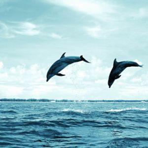 Het mooie Olieverfschilderij van het Zeegezicht van de Dolfijn