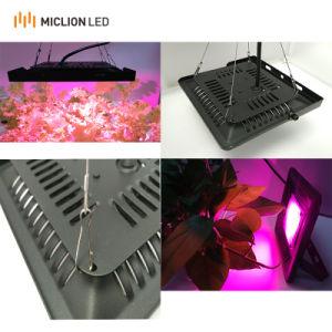 Ce marché de l'Europe croître lumière 150W en aluminium IP65 à spectre complet de projecteur