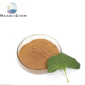 Estratto della pianta di Biloba del Ginkgo dei lattoni 6% dei flavoni 24%
