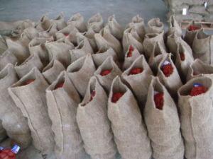 Формирование новых экспортных Каштановая Seasom 30-40