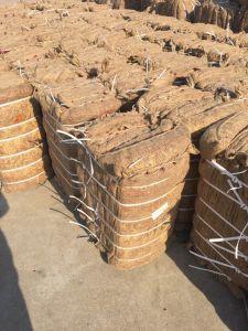 Neuer Getreide-gute Qualitätsexportfrischer Yidu-Paprika