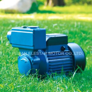 TPS 시리즈 구리 철사 Brss 임펠러 수도 펌프 모터