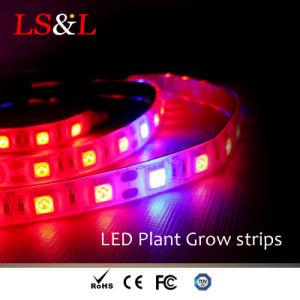 Indicatore luminoso flessibile della striscia di sviluppo di pianta del LED con Ce & RoHS