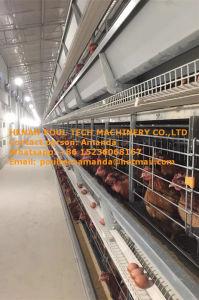 De Apparatuur van het Landbouwbedrijf van het Gevogelte van Paraguay - de Kooi van de Kip van de Batterij & de Kooi van de Laag met de Automatische Schone Machine van de Mest van de Kip in de Kippenren van de Kip