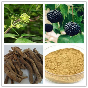 Extracto de Ginseng Siberiano puro Eleutherosides B + E 0,8%-1,5% HPLC, ID 100%, bajo los contaminantes de la aflatoxina, HAP, Non-Irradiation